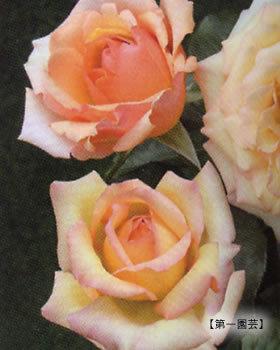 d_rose026.jpg